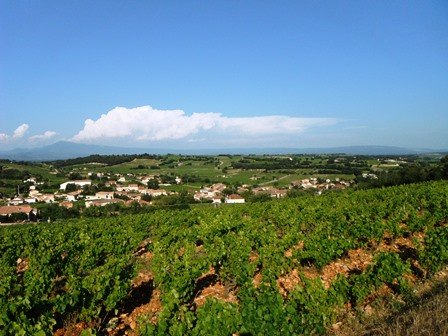 Chateauneuf-du-Pape vineyards